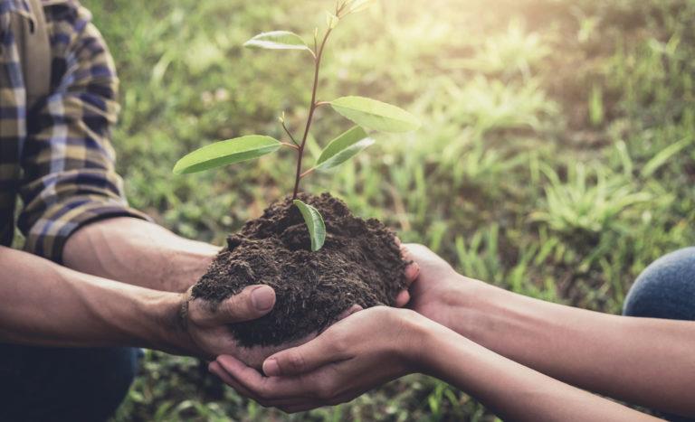 20 mil árboles para combatir la deforestación en Chuarrancho cempro guatemala cementos progreso