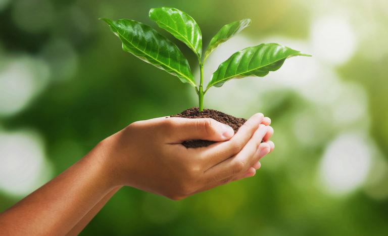 Cinco mil árboles de Noni para proteger la cuenca del río Guastatoya cempro guatemala cementos progreso