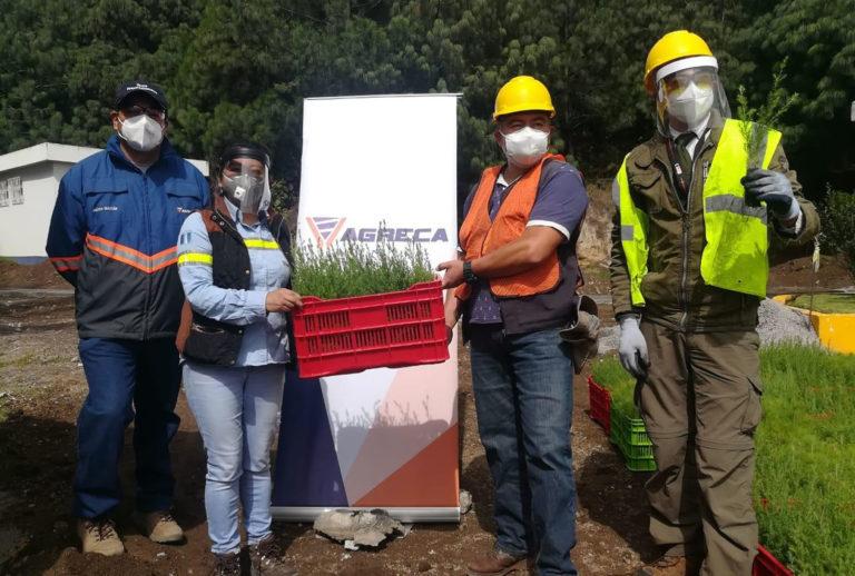 10 mil arbolitos para reforestar Quetzaltenango cempro cementos progreso agreca guatemala