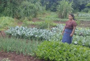 """Conoce nuestros """"Jardines vegetales"""", la opción para mejorar la seguridad alimentaria en San Juan Sacatepéquez cempro cementos progreso guatemala"""