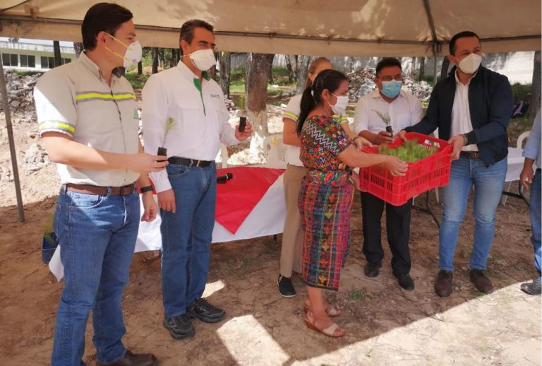 Se plantarán 50 mil árboles en San Martín Jilotepeque cempro cementos progreso guatemala