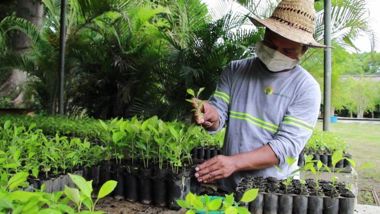 Los ODS: Retos y oportunidades para el sector privado cempro cementos progreso Guatemala agrobosques