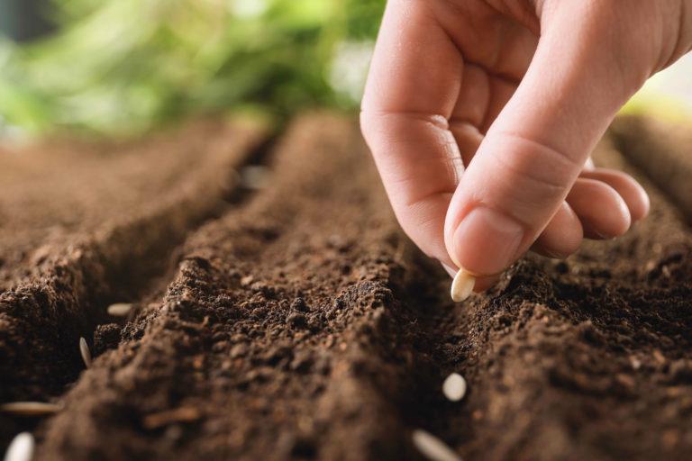 hortalizas quetzaltenango cempro cementos progreso guatemala