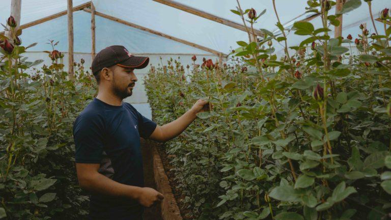 La economía inclusiva, un puente para el desarrollo sostenible de los territorios cempro cementos progreso guatemala