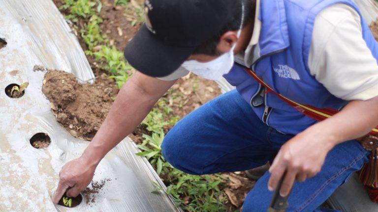 dia mundial de las legumbres Progreso Guatemala