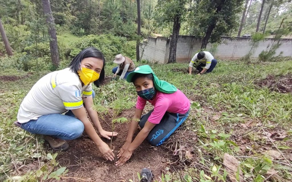donacion 106 mil arboles para reforestar guatemala progreso latam