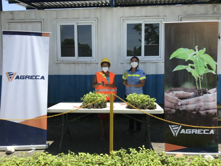 donan 6700 arboles para combatir reforstacion agreca guatemala progreso latam