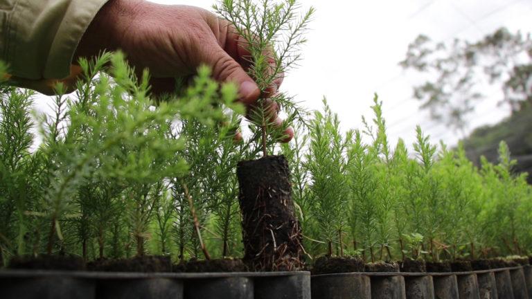 reforestar como acto de amor por la vida progreso latam guatemala