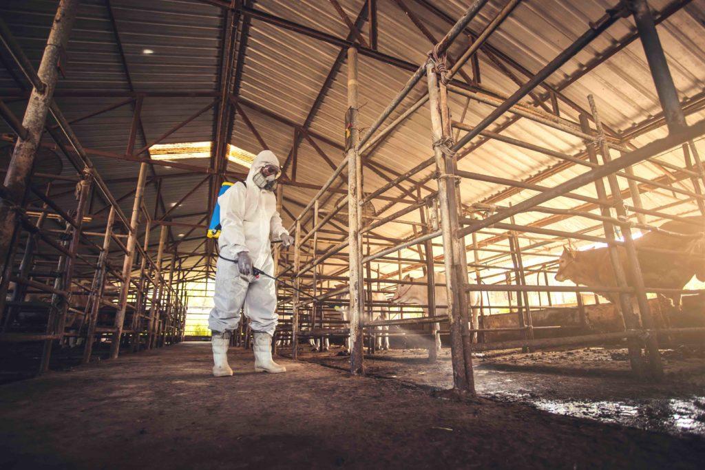 desinfectante de granjas - 14 usos de la cal